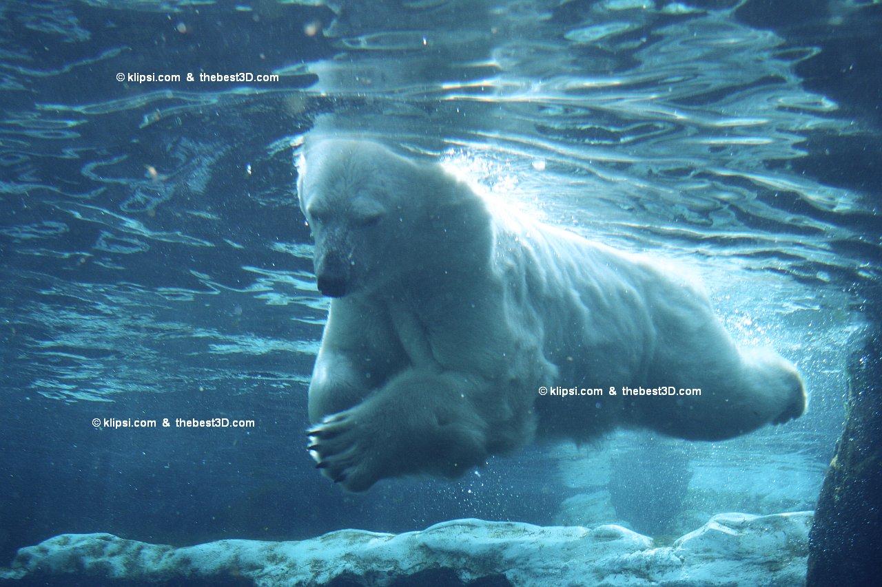 壁纸 动物 海洋动物 鲸鱼 桌面 1280_853